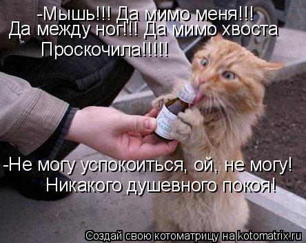 Котоматрица: -Мышь!!! Да мимо меня!!! Да между ног!!! Да мимо хвоста Проскочила!!!!! -Не могу успокоиться, ой, не могу! Никакого душевного покоя!