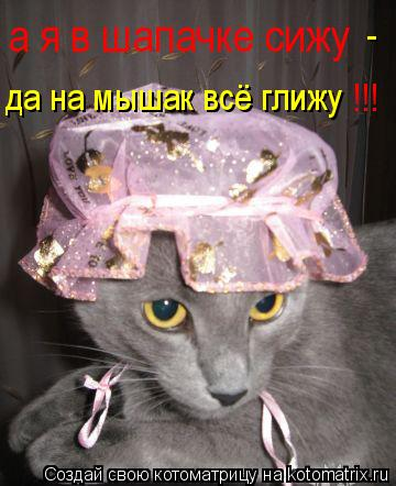 Котоматрица: а я в шапачке сижу да на мышак всё глижу - !!!