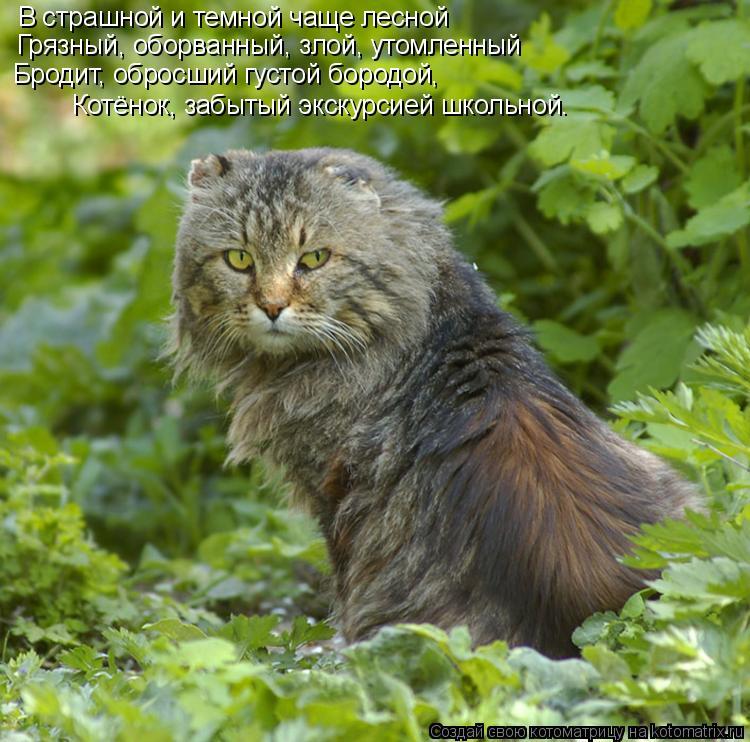 Котоматрица: В страшной и темной чаще лесной Грязный, оборванный, злой, утомленный  Бродит, обросший густой бородой,  Котёнок, забытый экскурсией школьно