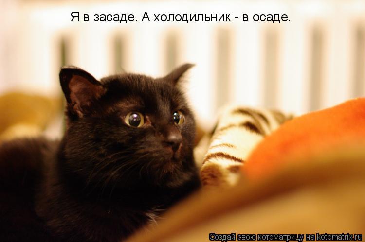 Котоматрица: Я в засаде. А холодильник - в осаде.
