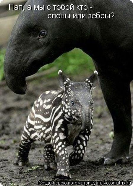 Котоматрица: Пап, а мы с тобой кто - слоны или зебры?