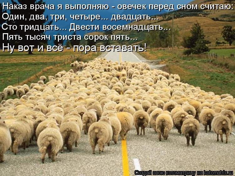 Котоматрица: Наказ врача я выполняю - овечек перед сном считаю: Один, два, три, четыре... двадцать... Сто тридцать... Двести восемнадцать... Пять тысяч триста
