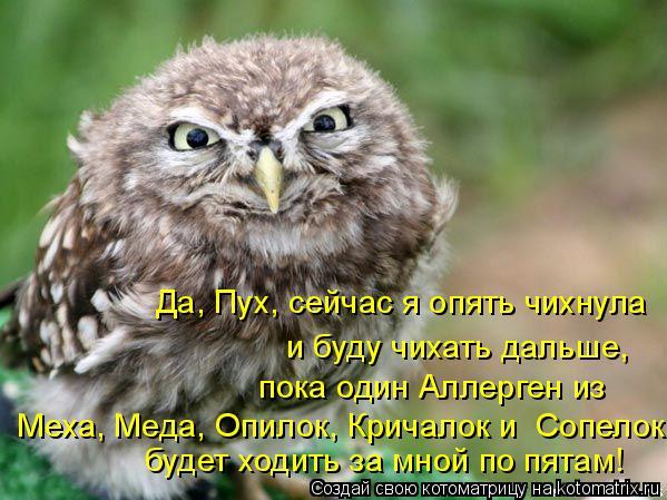 Котоматрица: и буду чихать дальше,  будет ходить за мной по пятам! пока один Аллерген из Меха, Меда, Опилок, Кричалок и  Сопелок  Да, Пух, сейчас я опять чихн