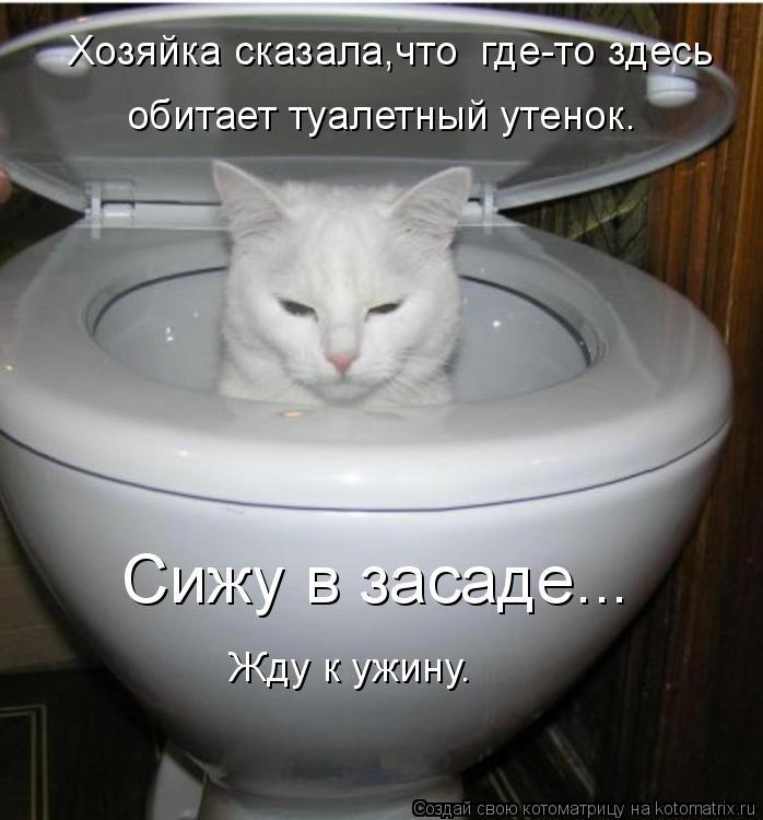 Котоматрица: Сижу в засаде...  Хозяйка сказала,что  где-то здесь  обитает туалетный утенок. Жду к ужину.
