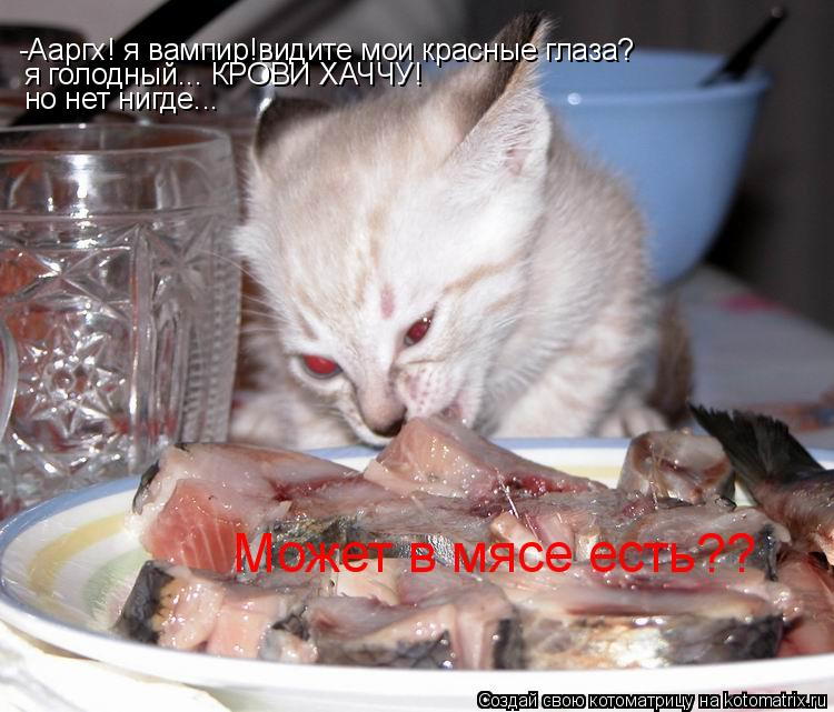 Котоматрица: -Ааргх! я вампир!видите мои красные глаза? я голодный... КРОВИ ХАЧЧУ! но нет нигде... Может в мясе есть??