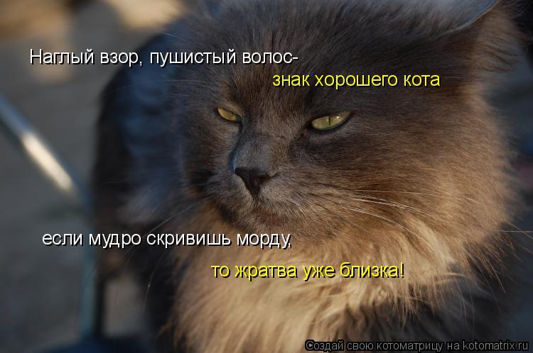 Котоматрица: Наглый взор, пушистый волос- знак хорошего кота если мудро скривишь морду, то жратва уже близка!