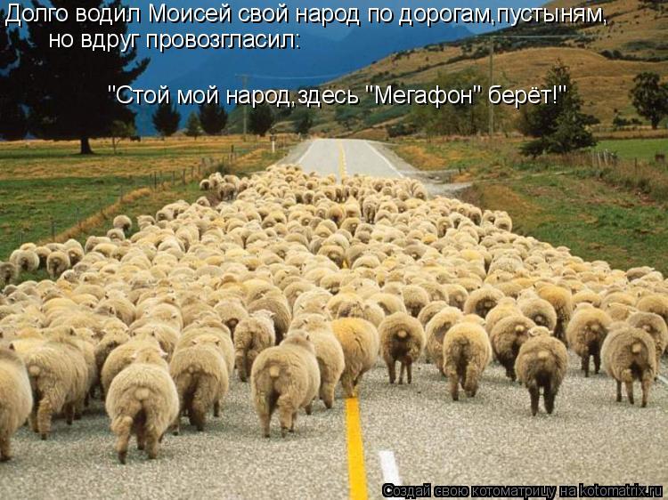 """Котоматрица: Долго водил Моисей свой народ по дорогам,пустыням, но вдруг провозгласил: """"Стой мой народ,здесь """"Мегафон"""" берёт!"""""""