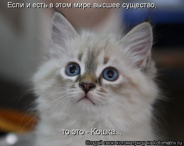 Котоматрица: Если и есть в этом мире высшее существо, то это - Кошка...