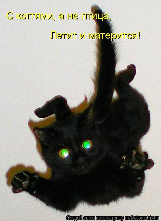 Котоматрица: С когтями, а не птица, Летит и матерится!