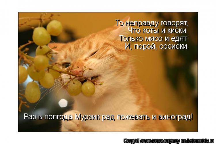 Котоматрица: То неправду говорят,  Что коты и киски Только мясо и едят И, порой, сосиски. Раз в полгода Мурзик рад пожевать и виноград!