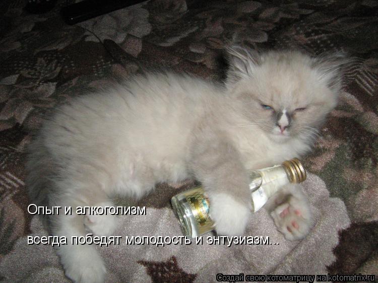 Котоматрица: Опыт и алкоголизм  всегда победят молодость и энтузиазм...