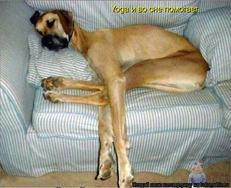 Котоматрица: Yoga и во сне помогает...