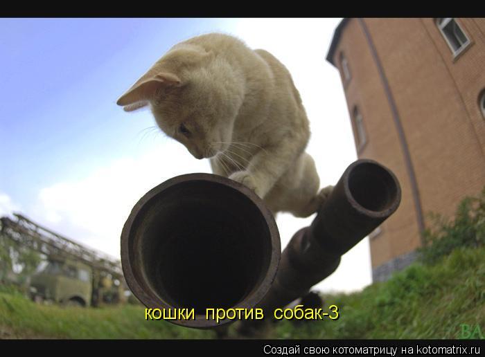 Котоматрица: кошки  против  собак-3