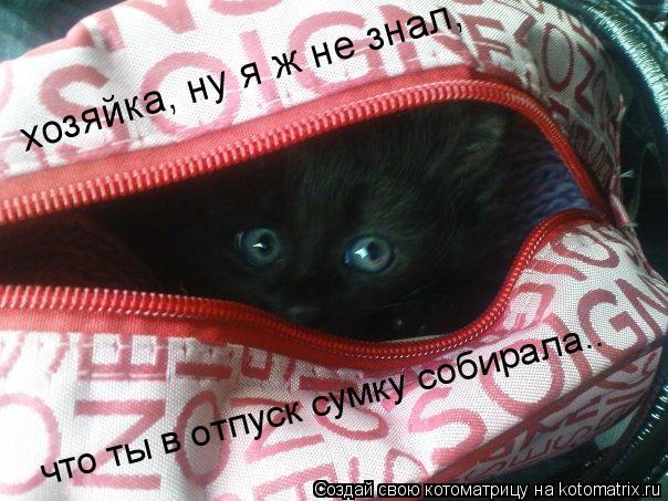 Котоматрица: хозяйка, ну я ж не знал,  что ты в отпуск сумку собирала..