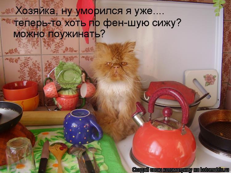 Котоматрица: Хозяйка, ну уморился я уже.... теперь-то хоть по фен-шую сижу? можно поужинать?