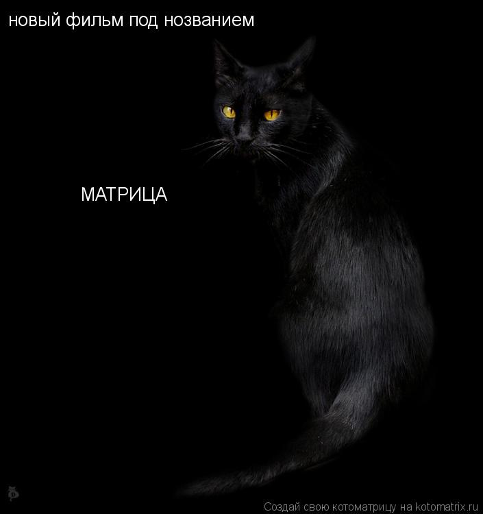 Котоматрица: новый фильм под нозванием          МАТРИЦА