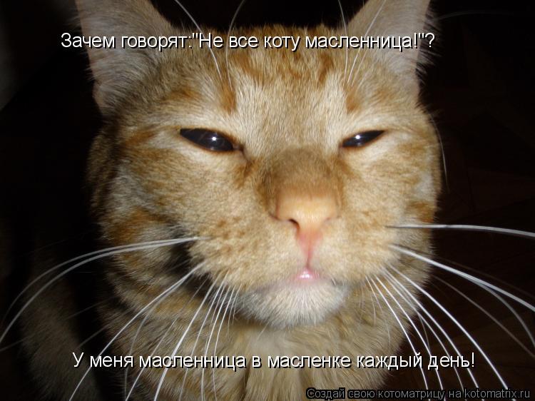 """Котоматрица: Зачем говорят:""""Не все коту масленница!""""? У меня масленница в масленке каждый день!"""