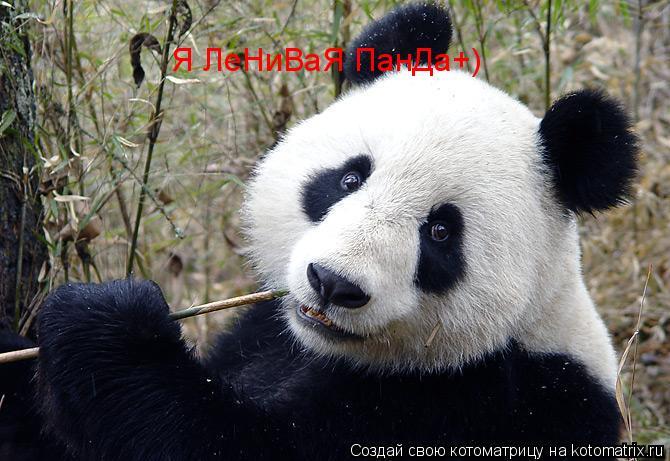 Котоматрица: Я ЛеНиВаЯ ПанДа+)