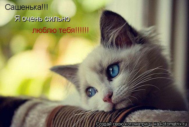 Котоматрица: Сашенька!!! Я очень сильно  люблю тебя!!!!!!