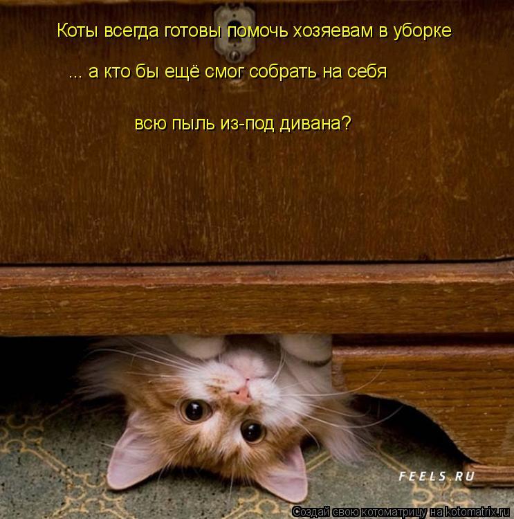 Котоматрица: Коты всегда готовы помочь хозяевам в уборке ... а кто бы ещё смог собрать на себя  всю пыль из-под дивана?