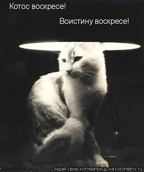 Котоматрица: Котос воскресе! Воистину воскресе!