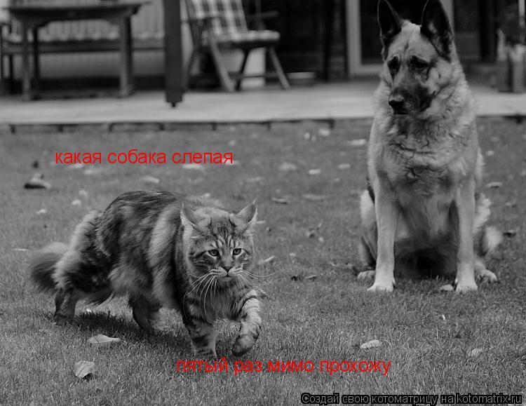 Котоматрица: какая собака слепая пятый раз мимо прохожу