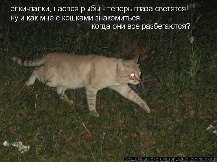 Котоматрица: елки-палки, наелся рыбы - теперь глаза светятся! ну и как мне с кошками знакомиться,  когда они все разбегаются?