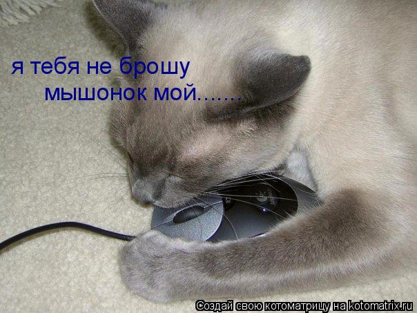 Котоматрица: я тебя не брошу мышонок мой.......