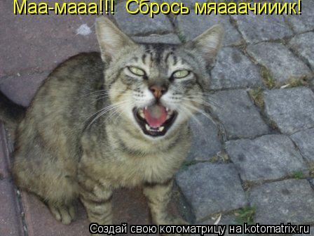 Котоматрица: Маа-мааа!!! Сбрось мяааачииик!