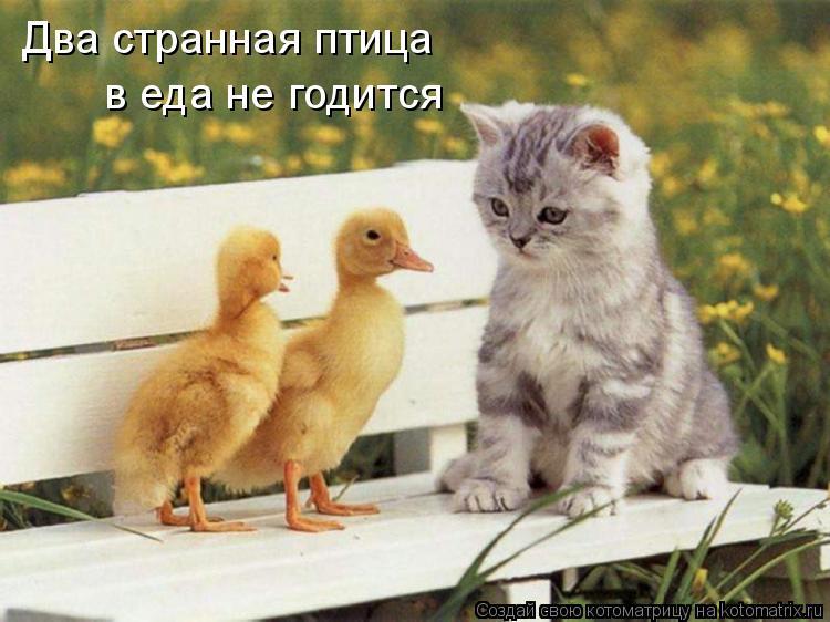Котоматрица: Два странная птица в еда не годится
