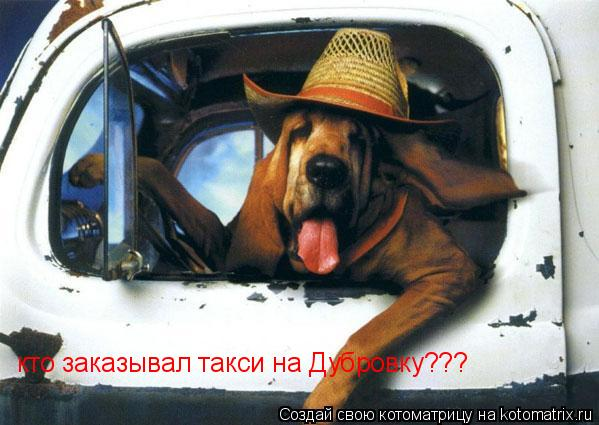 Котоматрица: кто заказывал такси на Дубровку???