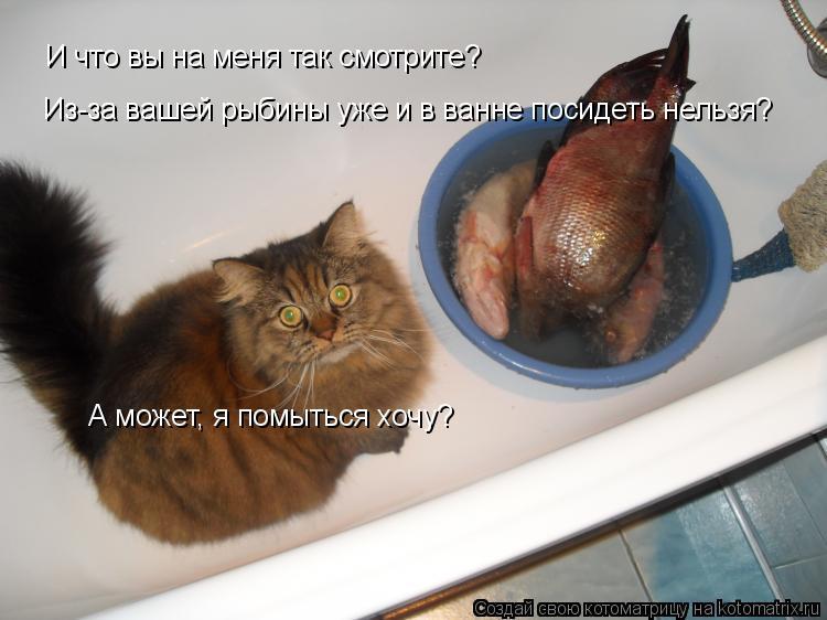 Котоматрица: И что? И что вы на меня так смотрите?  Из-за вашей рыбины уже и в ванне посидеть нельзя? А может, я помыться хочу?