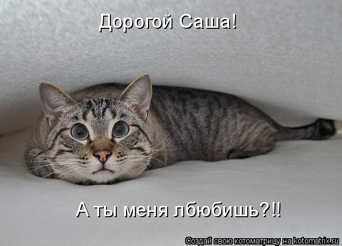 Котоматрица: Дорогой Саша!  А ты меня лбюбишь?!!