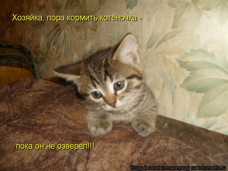 Котоматрица: Хозяйка, пора кормить котёночка -  пока он не озверел!!!