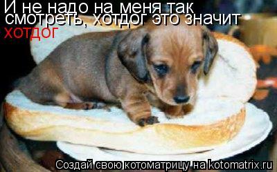 Котоматрица: И не надо на меня так смотреть, хотдог это значит хотдог
