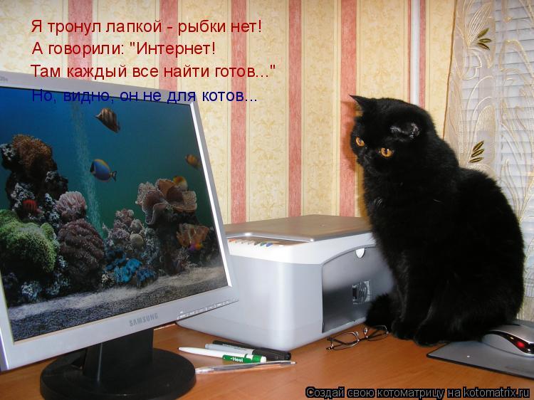 """Котоматрица: А говорили: """"Интернет! Но, видно, он не для котов... Там каждый все найти готов..."""" Я тронул лапкой - рыбки нет!"""