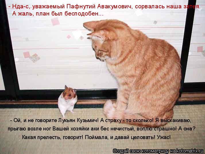 Котоматрица: - Нда-с, уважаемый Пафнутий Авакумович, сорвалась наша затея. А жаль, план был бесподобен... - Ой, и не говорите Лукьян Кузьмич! А страху - то ско