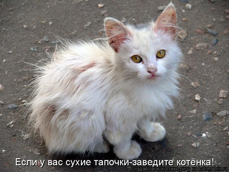 Котоматрица: Если у вас сухие тапочки-заведите котёнка!