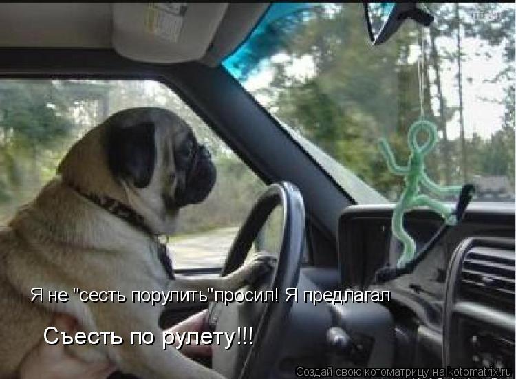 """Котоматрица: Я не """"сесть порулить""""просил! Я предлагал  Съесть по рулету!!!"""