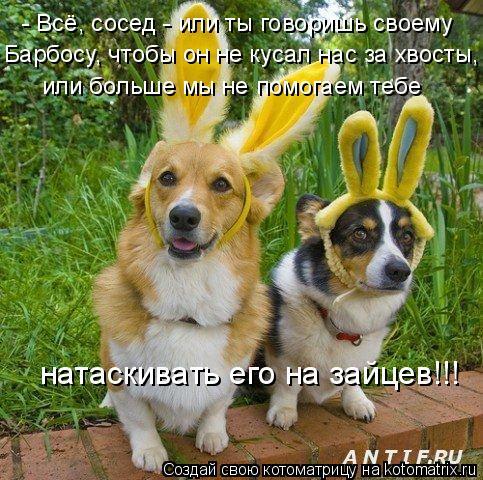Котоматрица: - Всё, сосед - или ты говоришь своему  или больше мы не помогаем тебе натаскивать его на зайцев!!! Барбосу, чтобы он не кусал нас за хвосты,