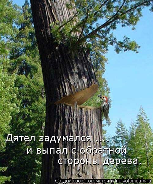 Котоматрица: Дятел задумался .... и выпал с обратной  стороны дерева.