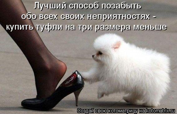 Котоматрица: Лучший способ позабыть  обо всех своих неприятностях -  купить туфли на три размера меньше