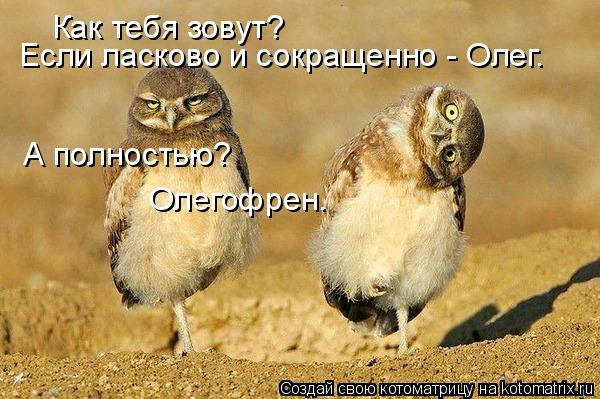 Котоматрица: Как тебя зовут? Если ласково и сокращенно - Олег. А полностью? Олегофрен.