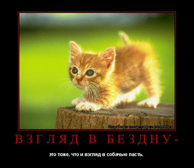 Котоматрица: Взгляд в бездну- это тоже, что и взгляд в собачью пасть.