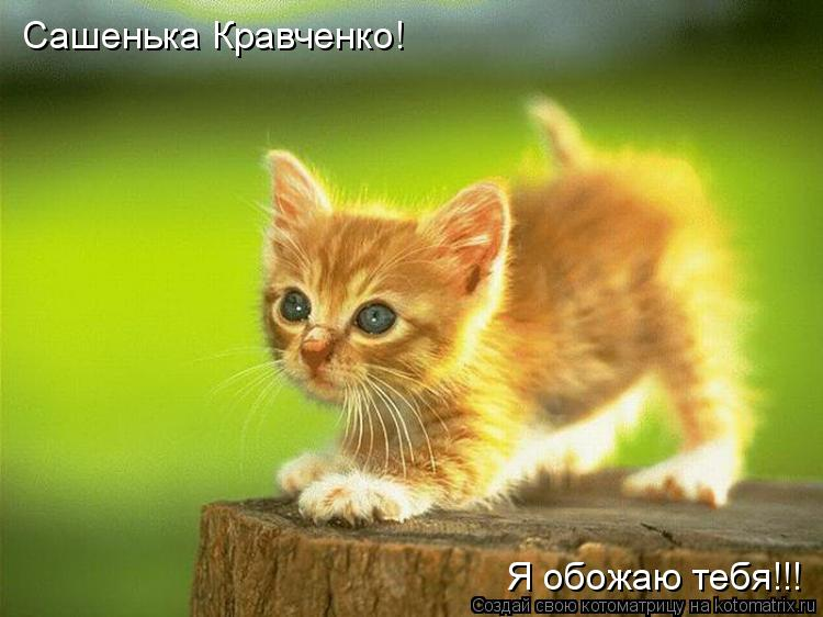 Котоматрица: Сашенька Кравченко! Я обожаю тебя!!!