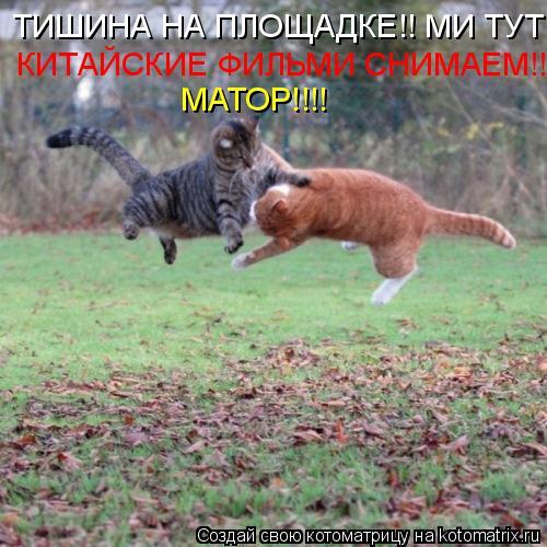 Котоматрица: МАТОР!!!! ТИШИНА НА ПЛОЩАДКЕ!! МИ ТУТ КИТАЙСКИЕ ФИЛЬМИ СНИМАЕМ!!!!  КИТАЙСКИЕ ФИЛЬМИ СНИМАЕМ!!!