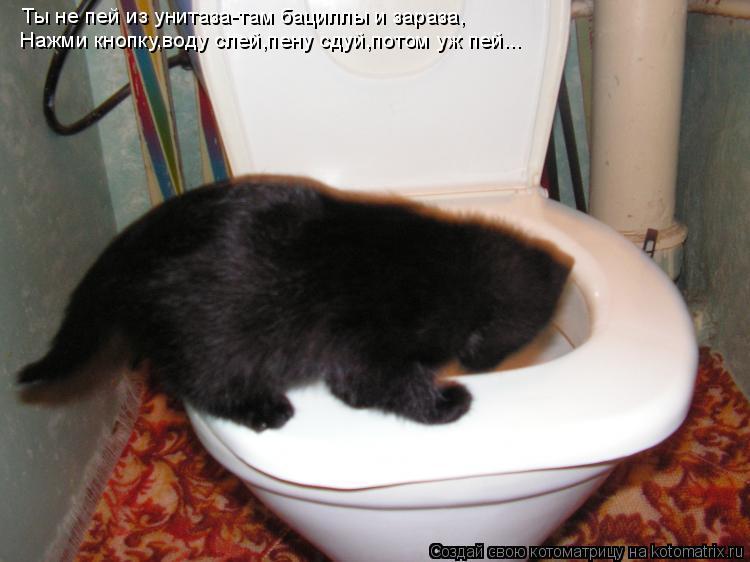 Котоматрица: Ты не пей из унитаза-там бациллы и зараза, Нажми кнопку,воду слей,пену сдуй,потом уж пей...
