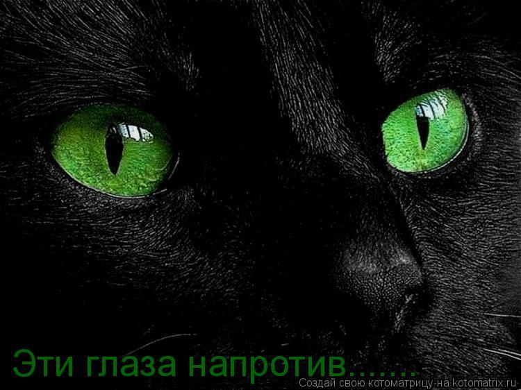 Котоматрица: Эти глаза напротив.......