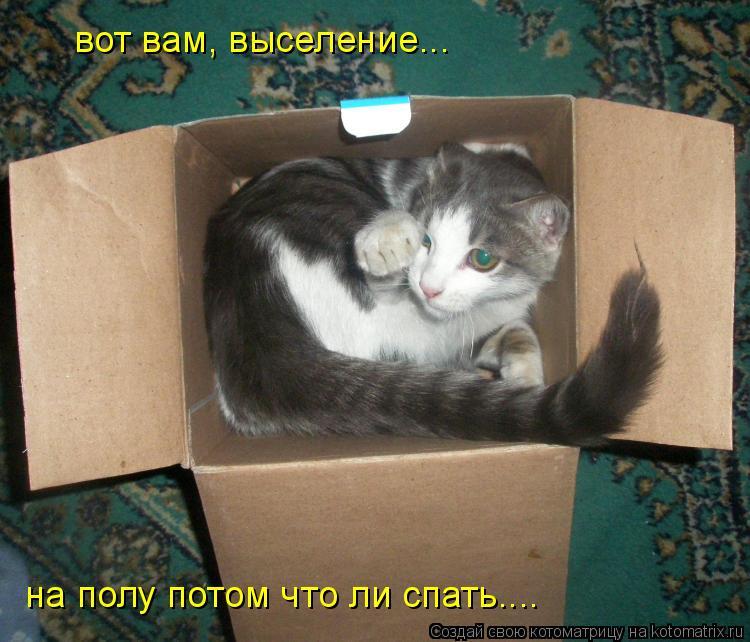Котоматрица: вот вам, выселение... на полу потом что ли спать....