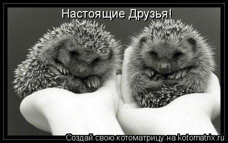 Котоматрица: Настоящие Друзья!